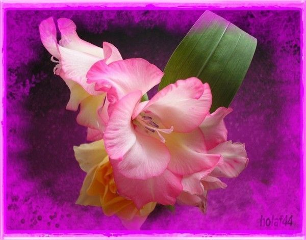 Jolies fleurs chez holaf44