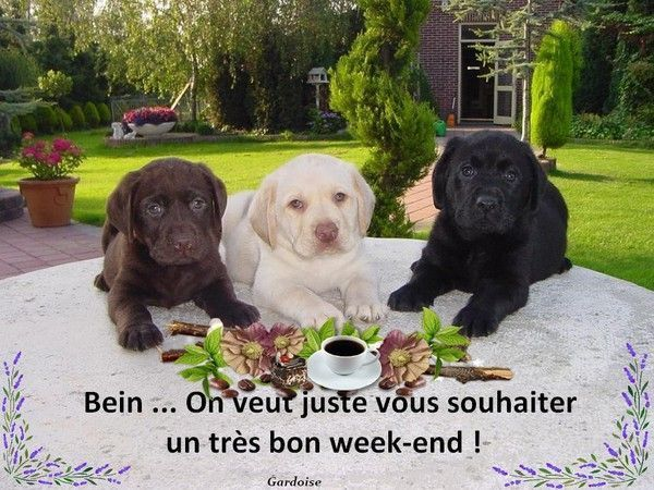 Bon week-end