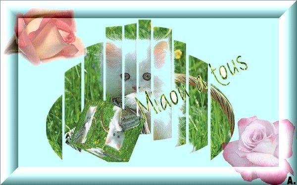 Miaou à tous