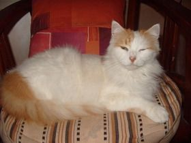 Fifi-sur-coussin.jpg