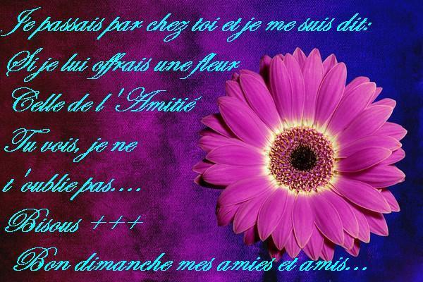 Bon Dimanche 85ddd524
